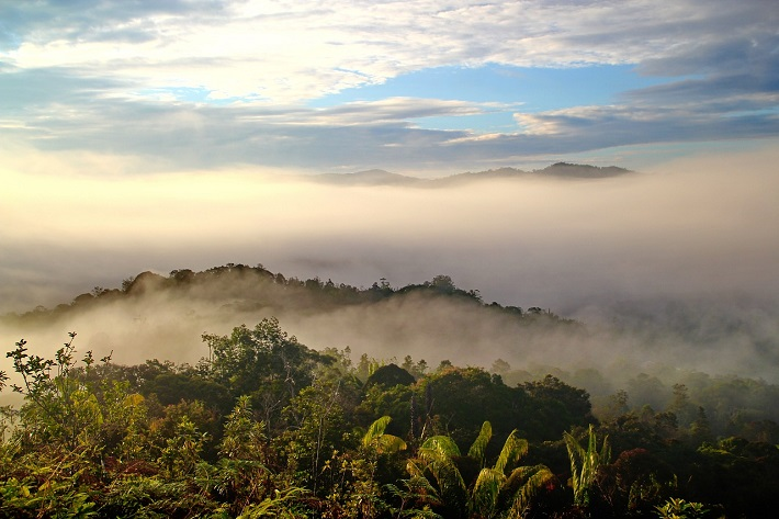 Mist above the canopy of a rainforest in Borneo