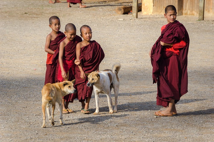 Young children dressed in Buddhist robes playing with dogs in Myanmar