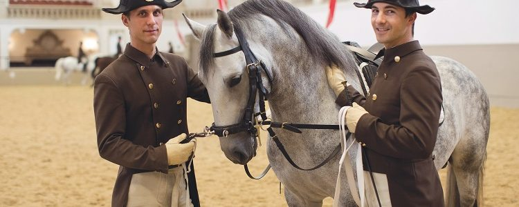 Horse trainers standing with a dapple grey lipizzaner at the Spanish Riding School in Vienna