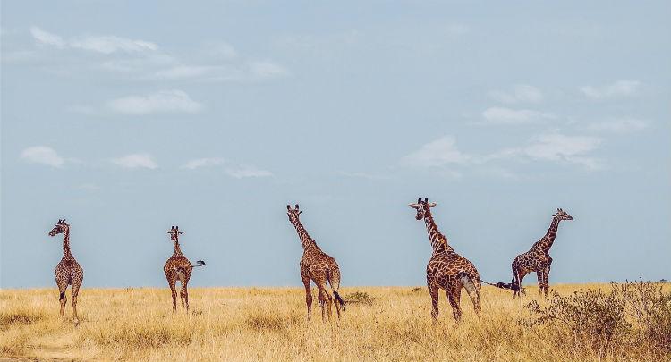 Chobe river - African wildlife