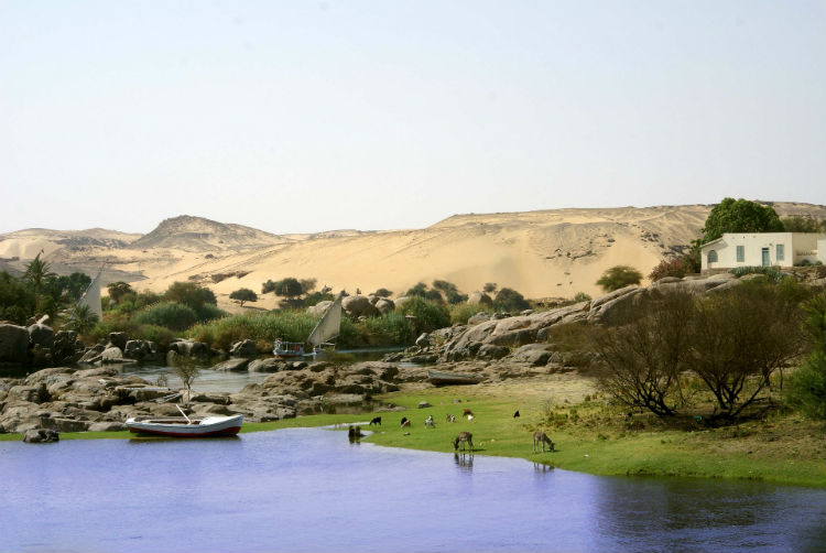 Banks of the Nile in Egypt
