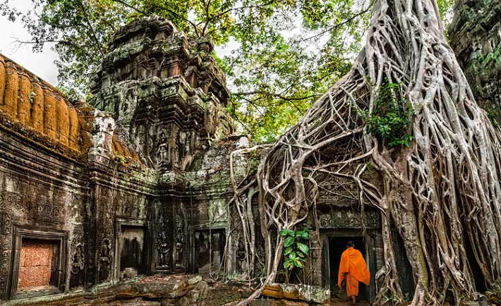 Buddhist monk entering the remains of a temple covered in tree roots